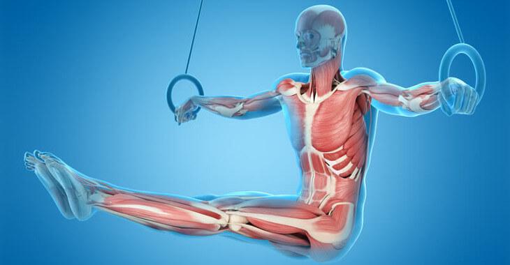 L-Carnitin: Wirkung im Körper| Biocarn®